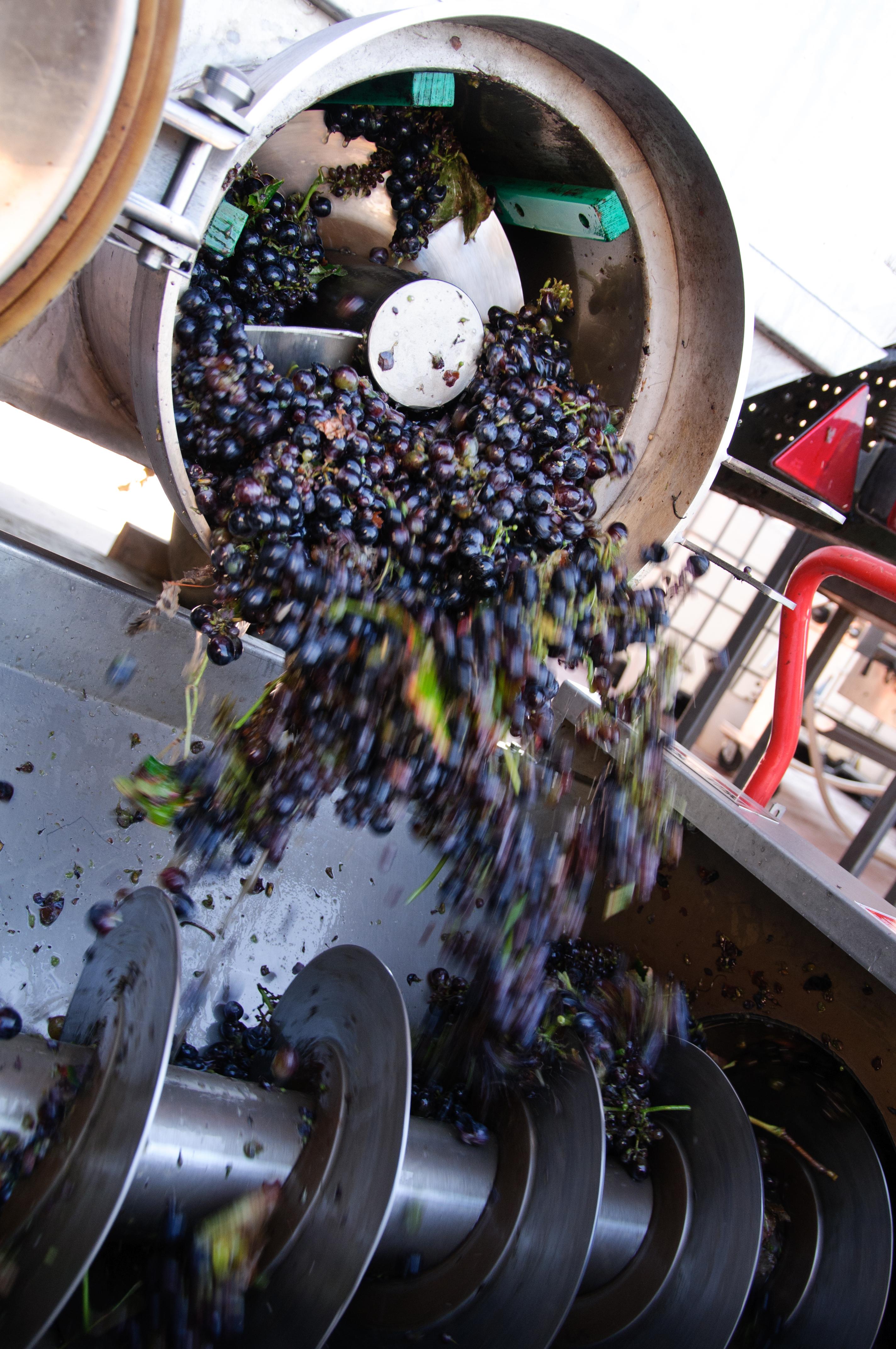 la-pigiatura-dell-uva