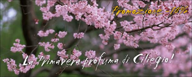 primavera-profuma-di-ciliegio